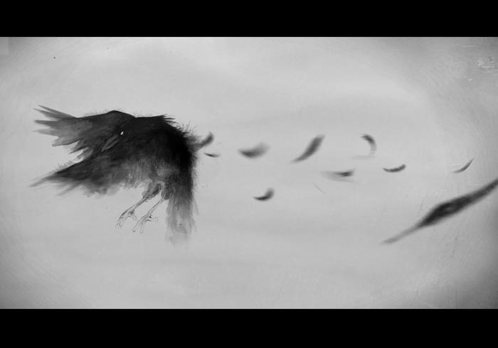 Titel: Krähe im Flug, Tusche, digitale Nachbearbeitung