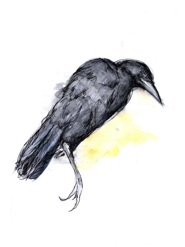 Crow, Aquarell/ Tusche